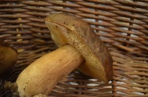 Porcino mushroom