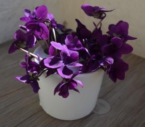 violets in vase